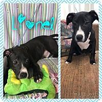 Adopt A Pet :: Lionel - Garden City, MI
