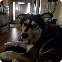 Adopt A Pet :: Parker - Grafton, WI