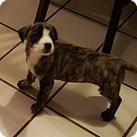 Adopt A Pet :: Bentley - Edisto Island, SC
