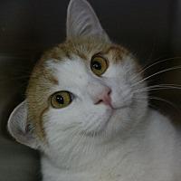 Adopt A Pet :: O'Malley - Canoga Park, CA