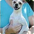 Adopt A Pet :: Denny
