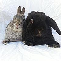 Adopt A Pet :: Menace and Blackie - El Cerrito, CA