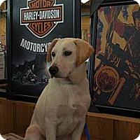 Adopt A Pet :: Granger - Houston, TX