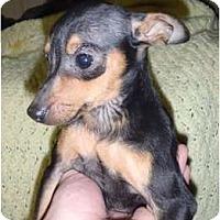 Adopt A Pet :: Rex - Antioch, IL