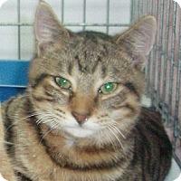Adopt A Pet :: Ferbie - Germansville, PA