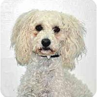 Adopt A Pet :: Blanca - Port Washington, NY