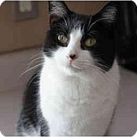 Adopt A Pet :: Chloe - Xenia, OH