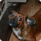Adopt A Pet :: Pudge