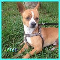 Adopt A Pet :: Jeter - Hollywood, FL