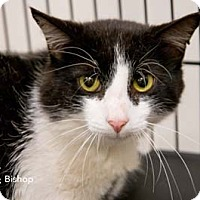Adopt A Pet :: Bishop - Merrifield, VA