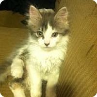 Adopt A Pet :: Arianna - Riverside, RI