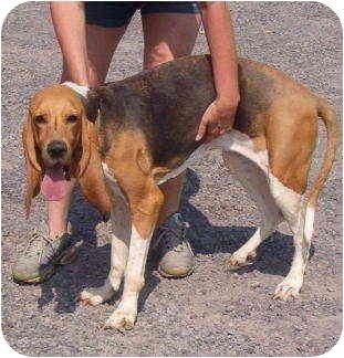 Dog Adoption Montreal Quebec