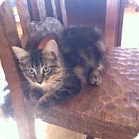 Adopt A Pet :: Em - Toronto, ON