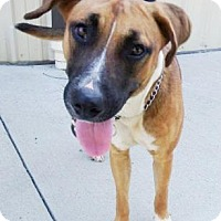 Adopt A Pet :: Lady - Lincolnton, NC