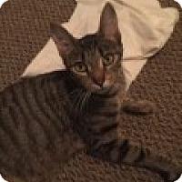 Adopt A Pet :: Bella - Livonia, MI