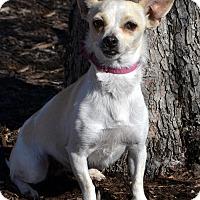 Adopt A Pet :: Juno - Bridgeton, MO