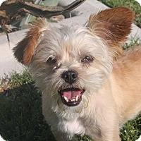 Adopt A Pet :: Ramsey - Henderson, NV