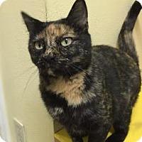 Adopt A Pet :: Isabelle - Baton Rouge, LA