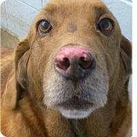 Adopt A Pet :: L.B. - Springdale, AR