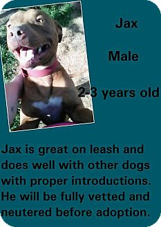 American Pit Bull Terrier Mix Dog for adoption in Stephenville, Texas - Jax