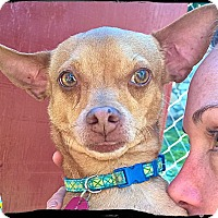 Adopt A Pet :: Tabasco - Johnson City, TX