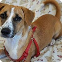 Adopt A Pet :: 'SUNNY' - Agoura Hills, CA