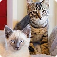 Adopt A Pet :: BEAU - Los Angeles, CA