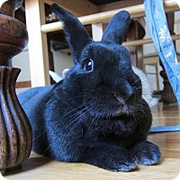 Adopt A Pet :: Onyx - Los Angeles, CA