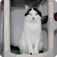 Adopt A Pet :: Dexter - Elliot Lake, ON