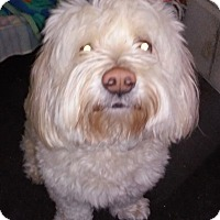 Adopt A Pet :: Candy - Franklin, NH