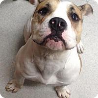 Adopt A Pet :: Winnie - Spokane, WA