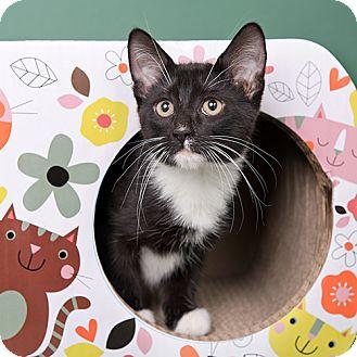 Domestic Mediumhair Cat for adoption in Wilmington, Delaware - Target