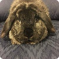 Adopt A Pet :: Dexter - Hillside, NJ