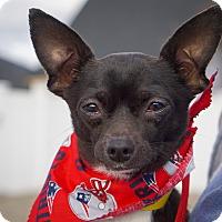 Adopt A Pet :: Rocky - Holliston, MA