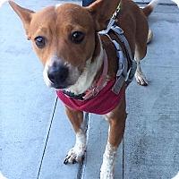 Adopt A Pet :: Fagan - Monrovia, CA