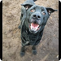 Adopt A Pet :: Spencer - Brookhaven, NY