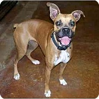 Adopt A Pet :: Jazzy - Carencro, LA