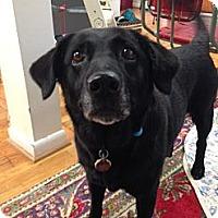 Adopt A Pet :: Coco - Marietta, GA