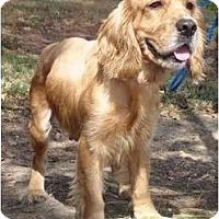 Adopt A Pet :: Marcie - Sugarland, TX