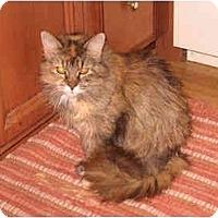 Adopt A Pet :: Mattie - Colmar, PA