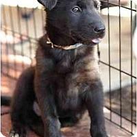 Adopt A Pet :: Jack - Alexandria, VA