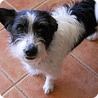 Adopt A Pet :: Gypsy - dewey, AZ