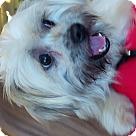 Adopt A Pet :: Josh Homme