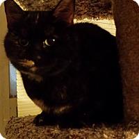 Adopt A Pet :: Dalilah - brewerton, NY