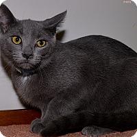 Adopt A Pet :: Mo Mo - Medina, OH