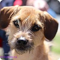 Adopt A Pet :: Marley - Alpharetta, GA