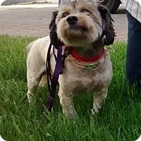 Adopt A Pet :: Bebita - Logan, UT