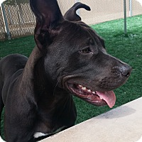 Adopt A Pet :: Saltar - Chula Vista, CA