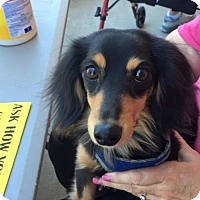 Adopt A Pet :: Mikey - Aurora, CO