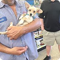 Adopt A Pet :: Timmy - Brea, CA